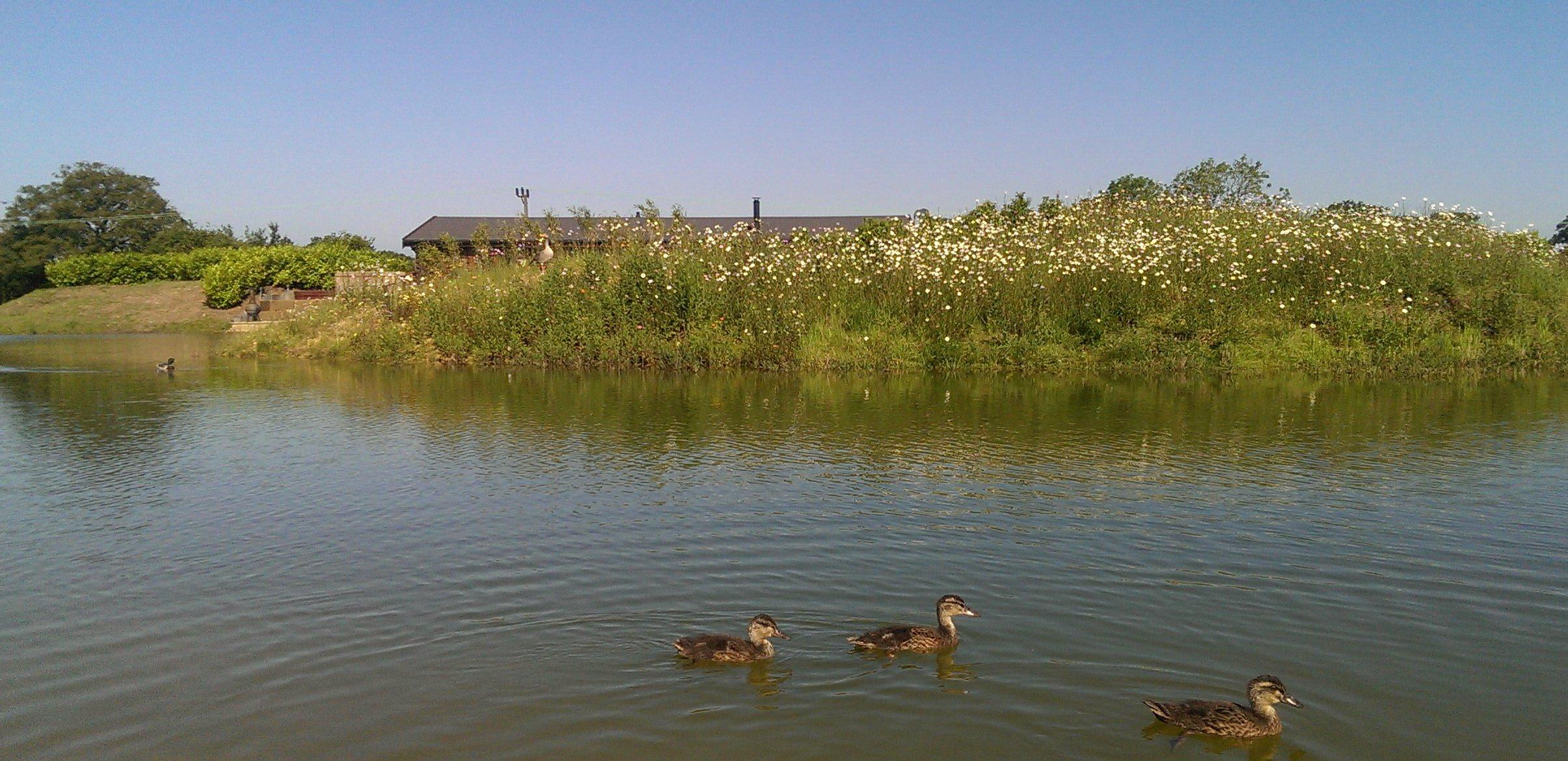 Suffolk Escape Waterfowl