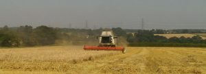 Harvest Time at The Suffolk Escape