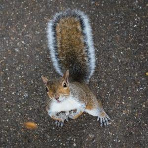 Suffolk Wildlife