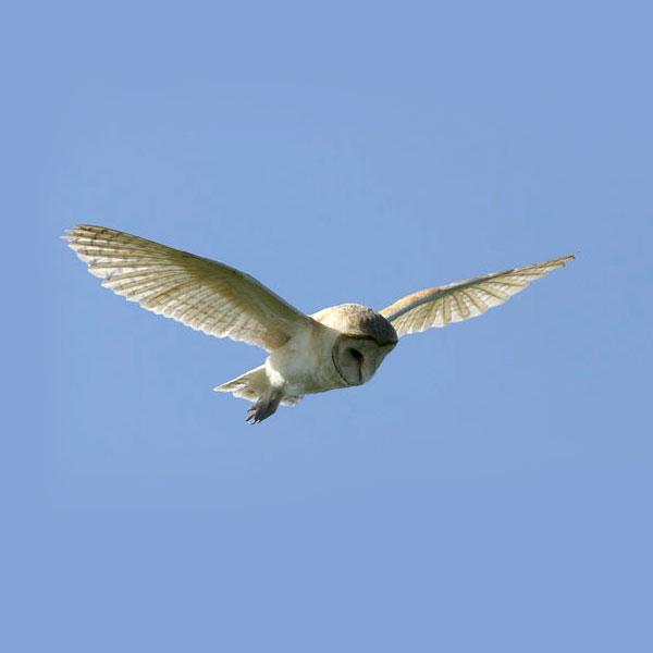 suffolk escape owl holiday