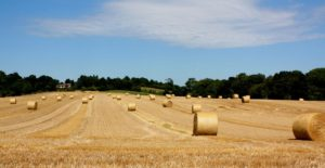 Bales-of-Straw