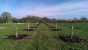 Orchard-Planted
