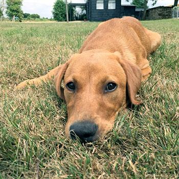 dog holiday suffolk escape
