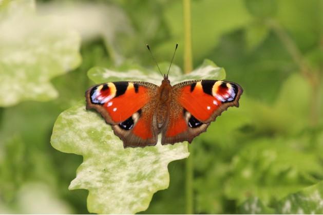 Butterfly – Paul Gratton