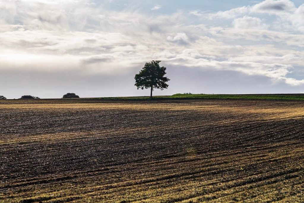 Neil Valentine – tree and field