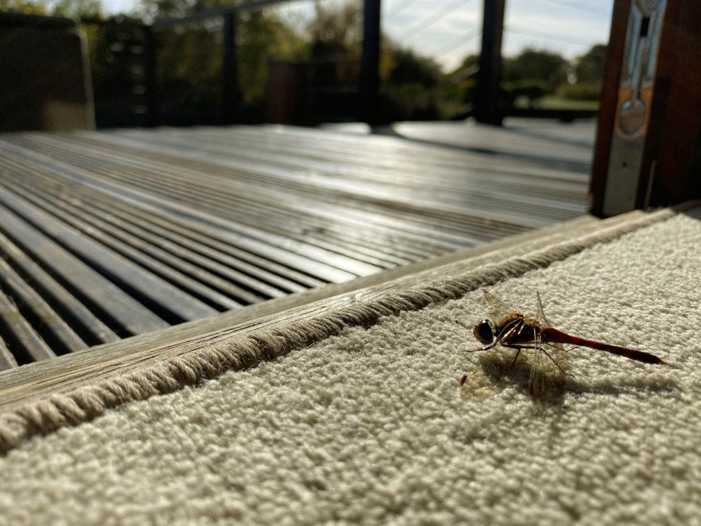 Stewart Sutters – dragonfly in cabin 1